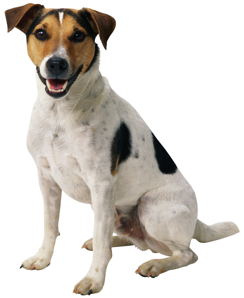 dog png happy puppy