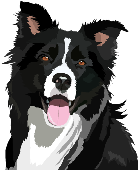 Border Collie PNG File