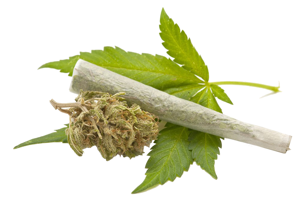 Cannabis Leaves Png