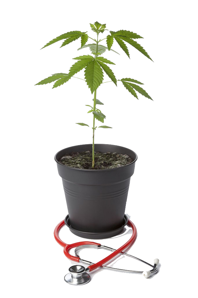 Potted marijuana and stethoscope Free PNG