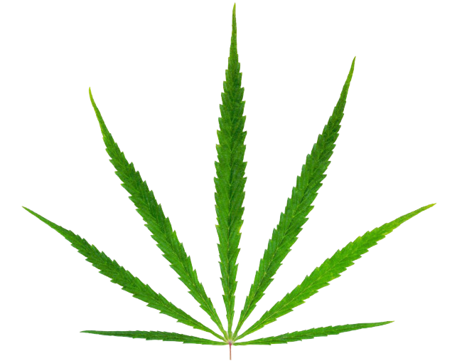 Green marijuana png