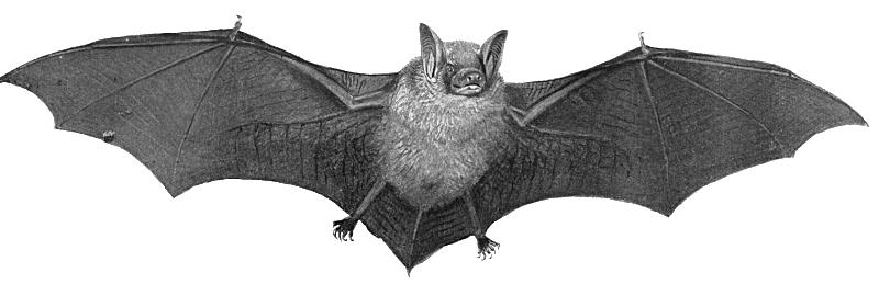 2 2 Halloween Bat Transparent
