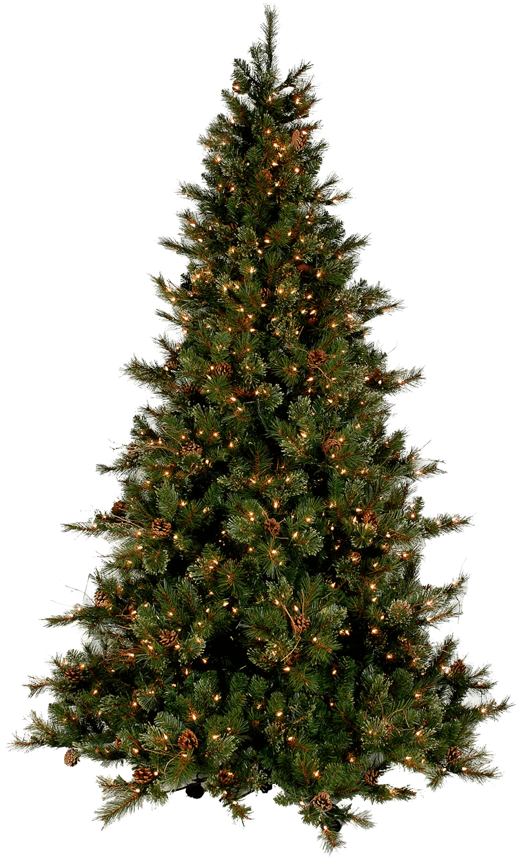 Real christmas tree free download png - Tree images free download ...