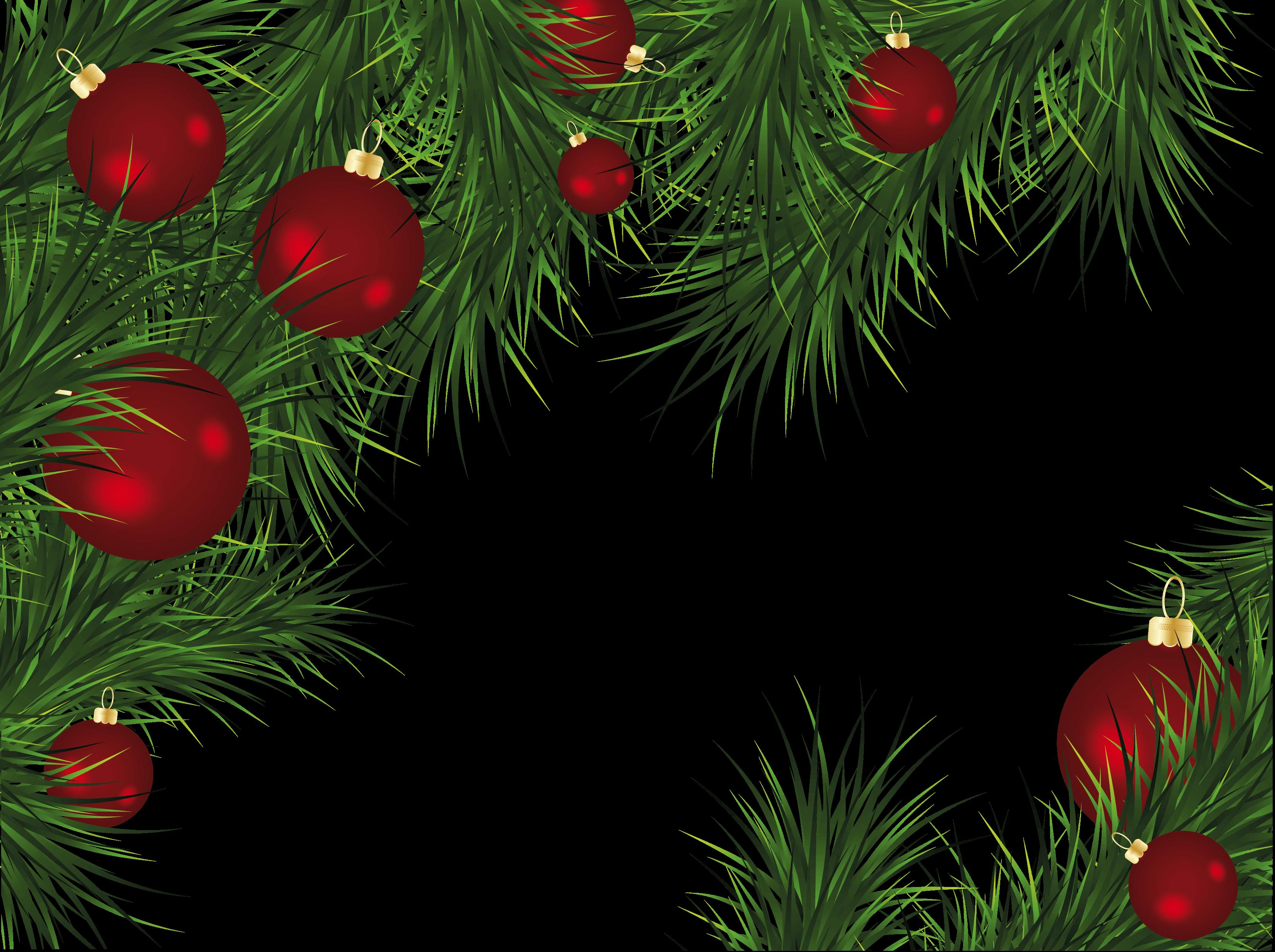 Christmas Trees Png.Christmas Fir Tree Png Image