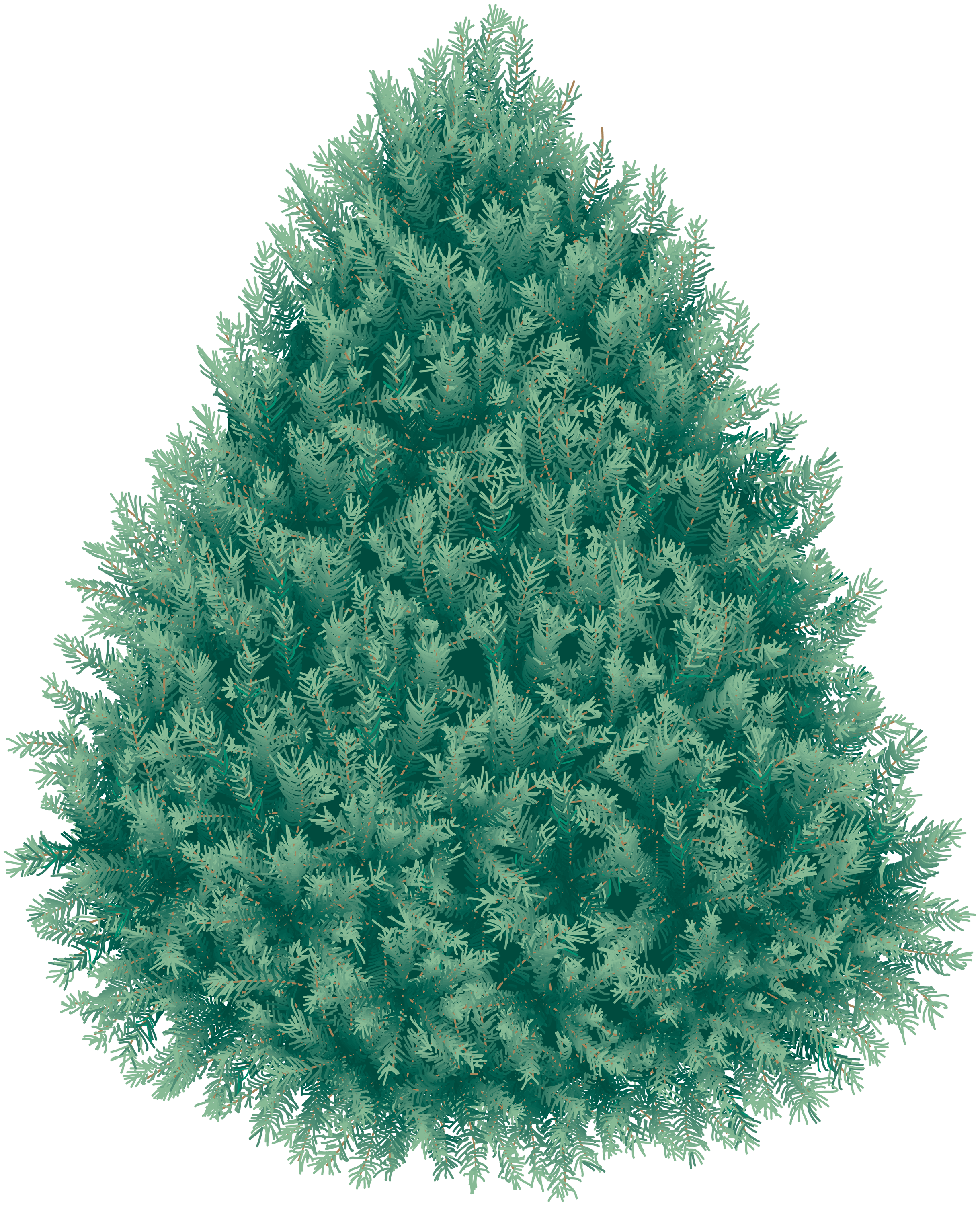 real christmas fir tree png image