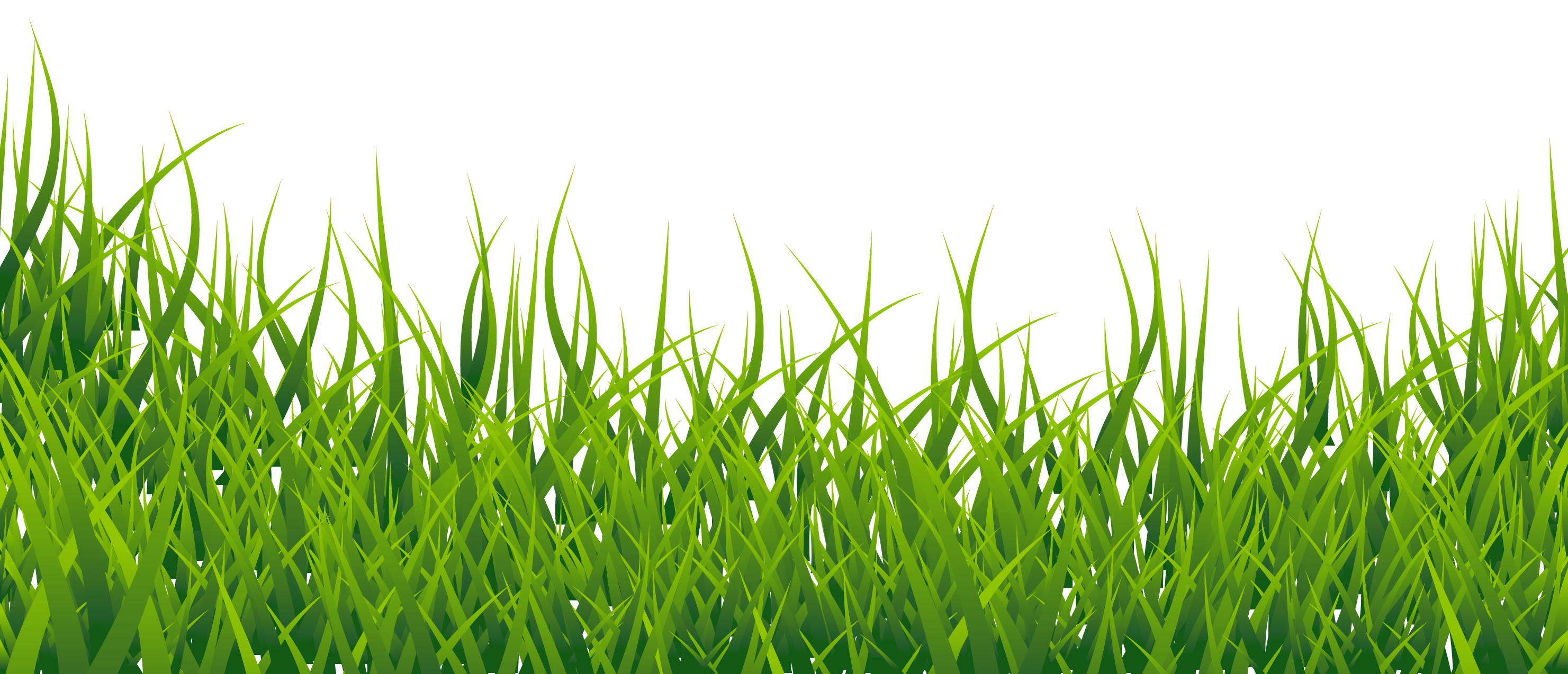 Hd Grass PNG Transparent Image