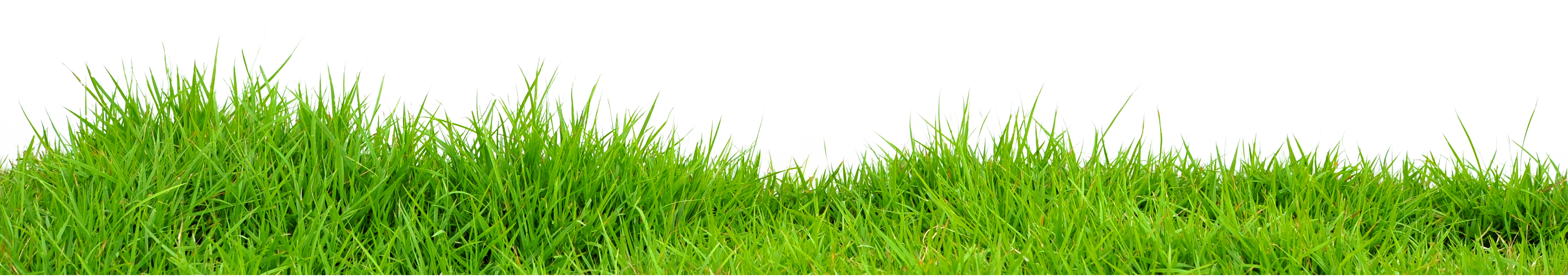 Grass PNG Images