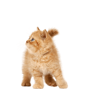 6 Cat Png Image Download Picture Kitten