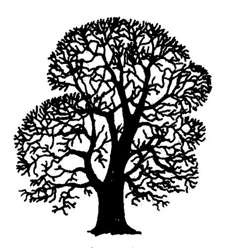 english oak tree clipart black and white