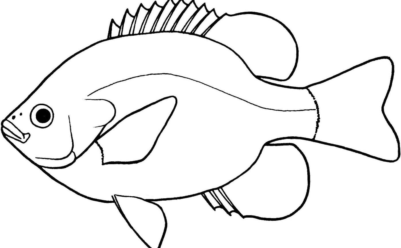fish clipart outline autosparesuk within clipart black and white