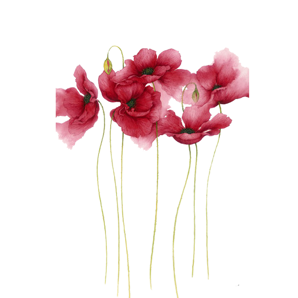 Watercolor Painting Flower Drawing Art Watercolor Flowers Pink