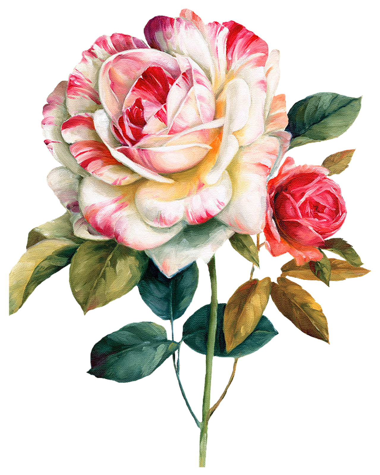 Pink And Red Roses Flower Watercolor Painting Floral Design Oil