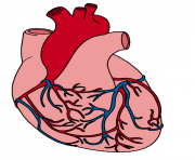 Hearts real heart clipart