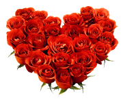 rose png love flower 642
