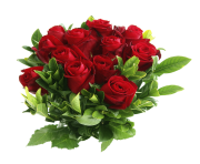 rose png flower 648