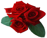 three red rose png flower