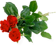 rose png flower 657