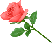 rose png flower pink love