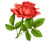 rose png flower 659