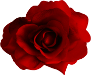 rose png flower cute