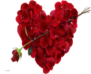 rose png love valentines day