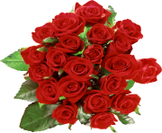 rose png flower 646