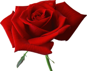 rose png flower free image clipart