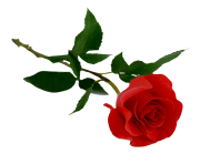 rose png flower 649