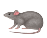 ios emoji rat