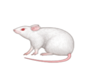 ios emoji mouse
