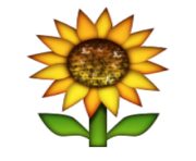 ios emoji sunflower