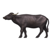 ios emoji water buffalo