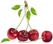 Cherries PNG Clipart