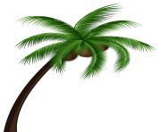 Coconut Palm Tree PNG Clip Art