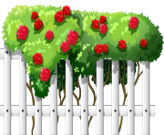 White Fence with Roses PNG Clipart