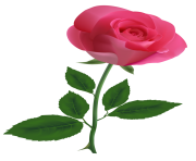 Pink Rose ClipArtPNG Image