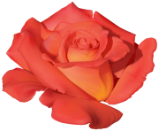 Orange Rose PNG Clipart