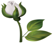 White Rose Bud PNG Clipart