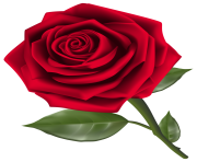 Beautiful Red Rose PNG Clipart