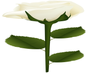 White Rose PNG Clip Art