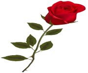 Beautiful Stem Red Rose PNG Clipart