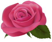 Pink Rose PNG ClipArtImage
