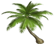 palm tree png image 2500