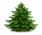 fir tree png transparent 2480