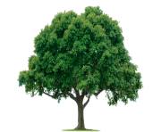 tree png 1380909949