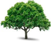 tree png 216