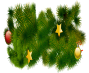 fir tree png transparent 2479