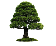tree png 1380909634