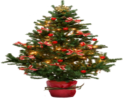 fir tree png transparent 2515