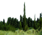 forest png transparent background